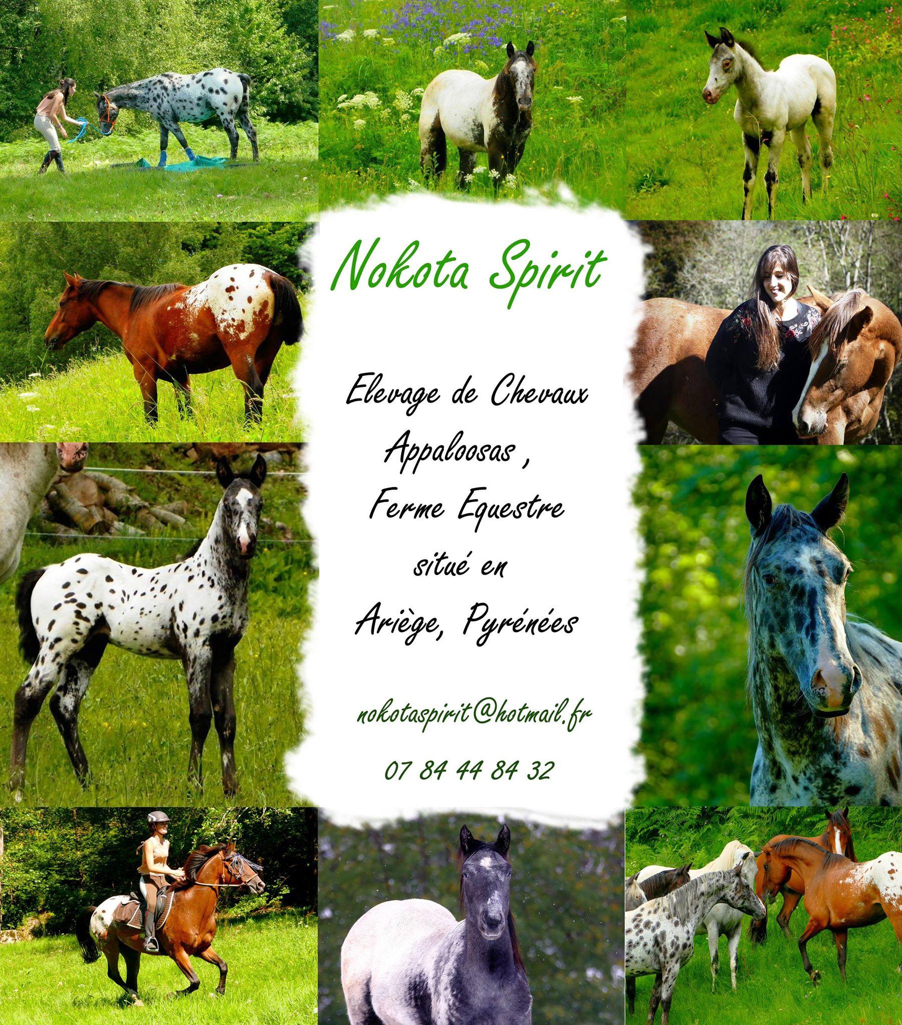Nokota Spirit