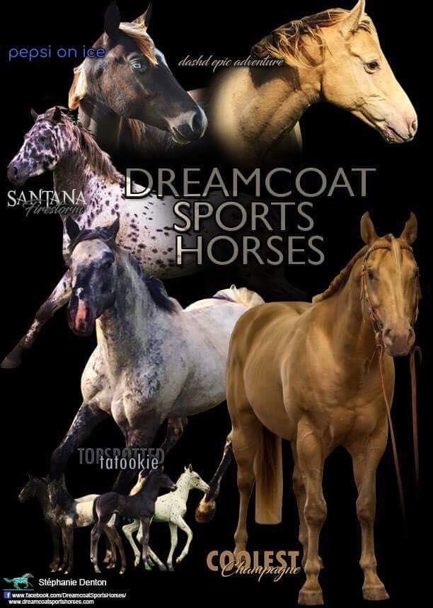 Dreamcoat Sports Horses